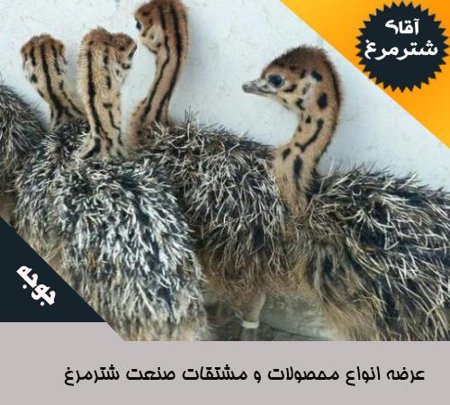 قیمت انواع جوجه شترمرغ